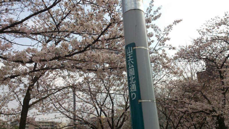 桜の咲く時期