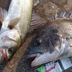 wanganfishing