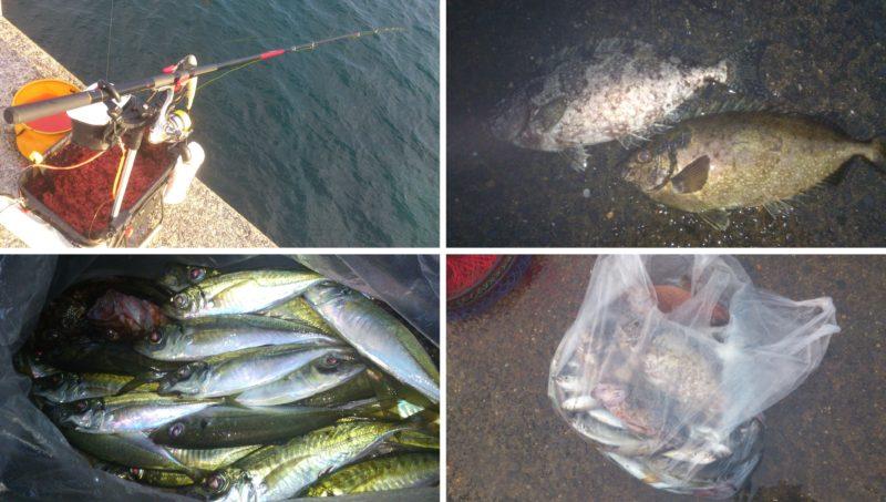 フカセ釣りの釣果