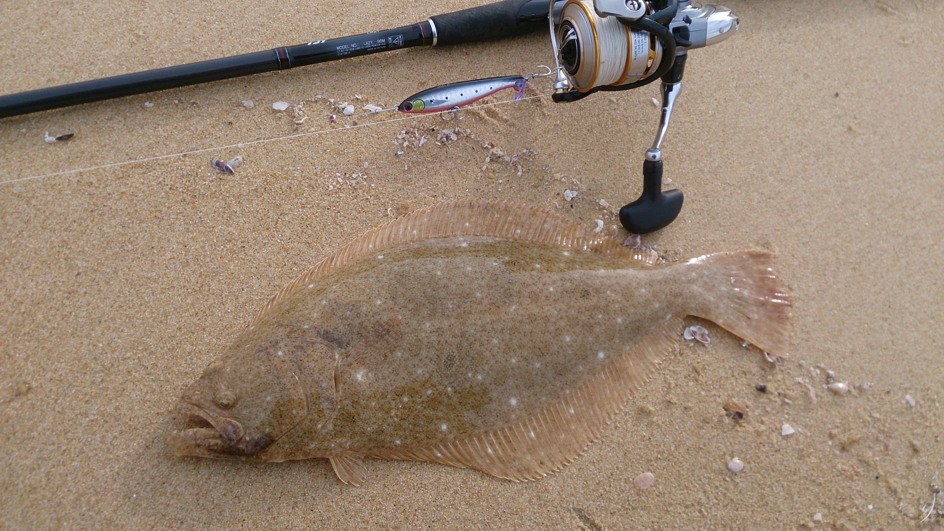 35cmヒラメ