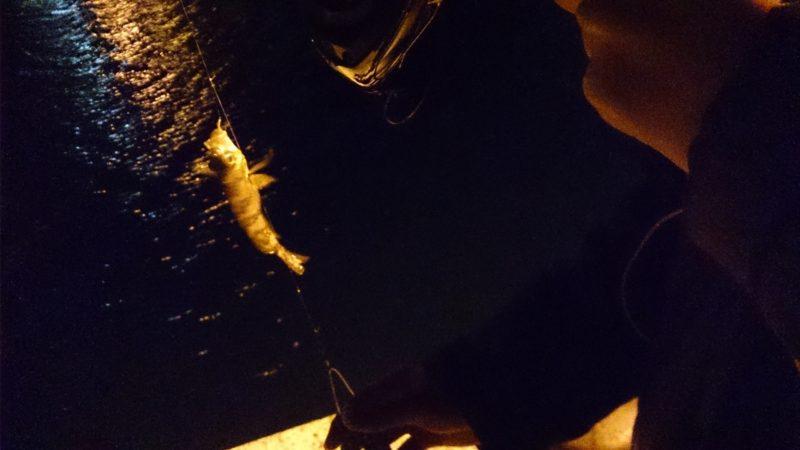 夜釣りでメバル