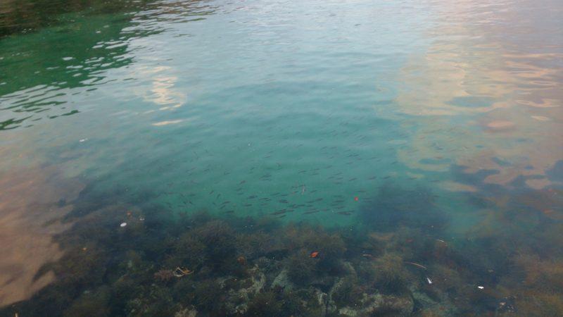 浅瀬に広がる藻場