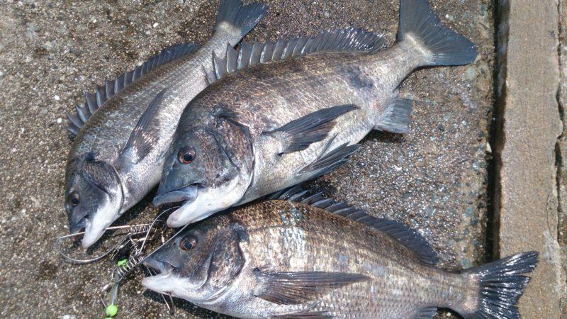 2020チヌ釣り始動で3匹