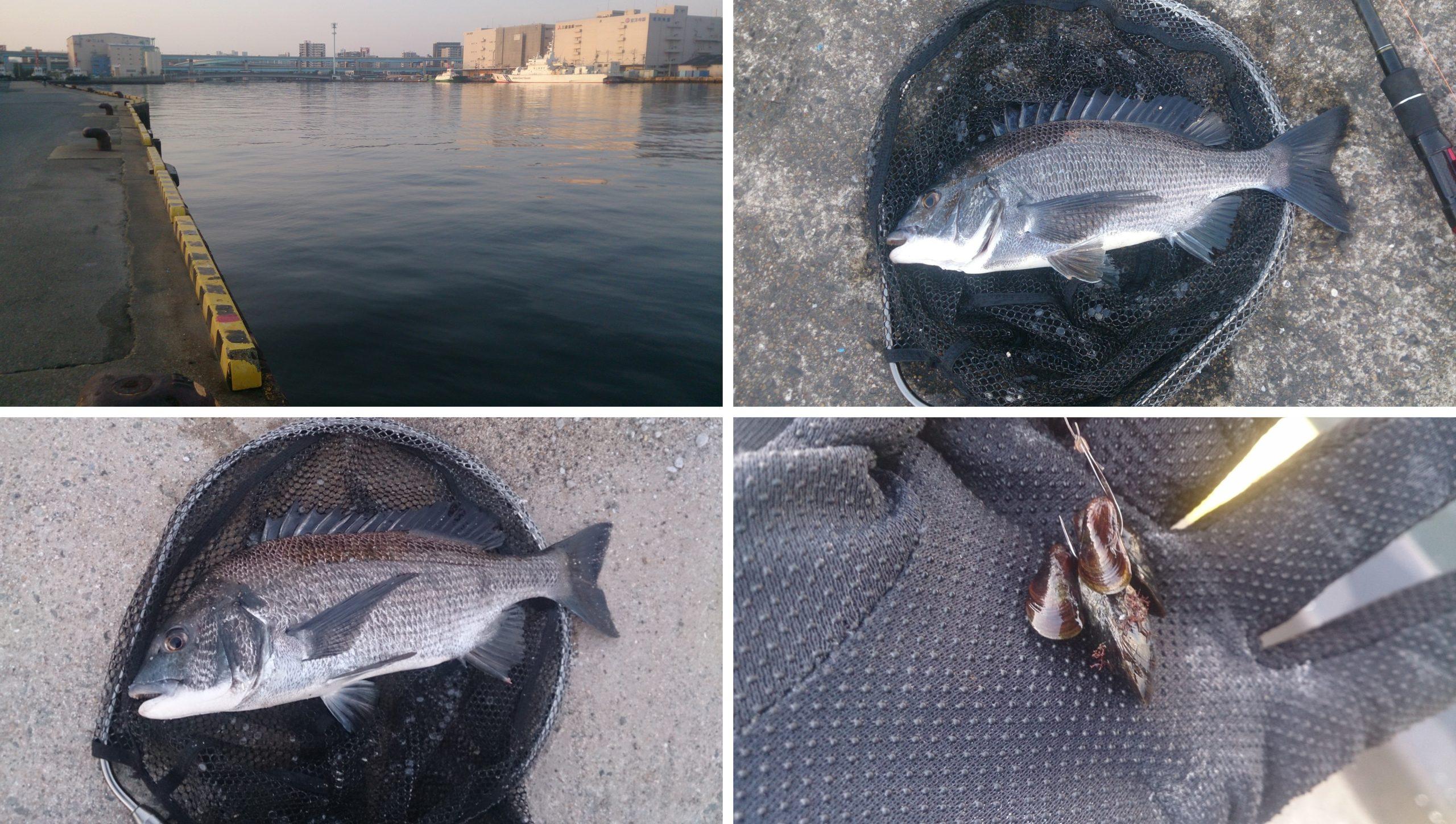 河口でチヌ釣り