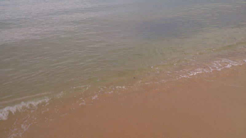 波打ち際のベイト