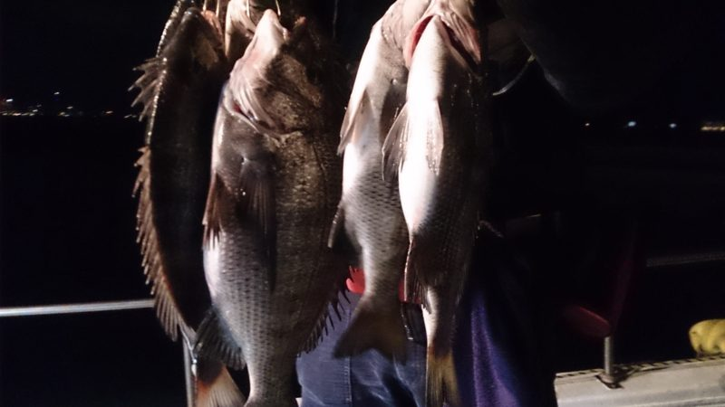 夜釣りでチヌ爆釣