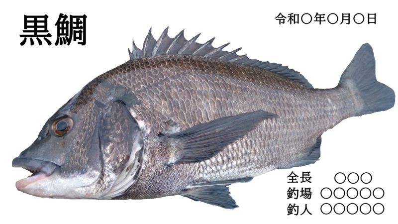 チヌの魚拓