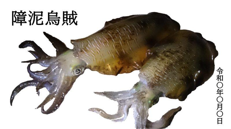 障泥烏賊の魚拓