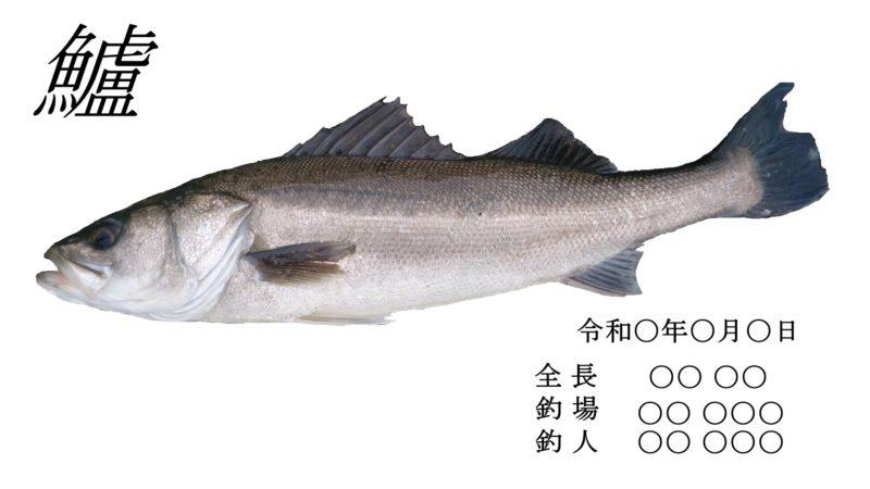 シーバス魚拓