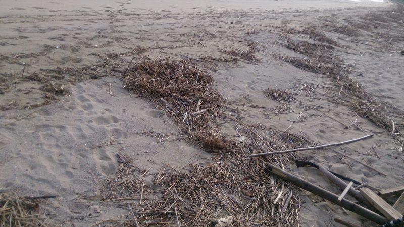 荒れた砂浜海岸